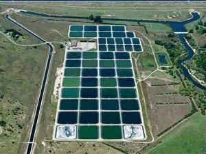 Aquaculture - COMANCO