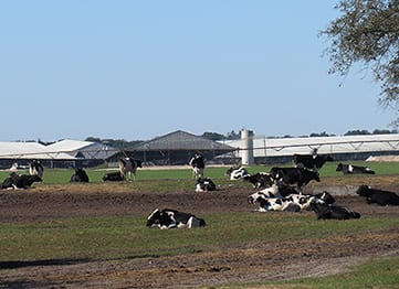 Agriculture - COMANCO